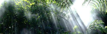 rainforest_section02_foto01