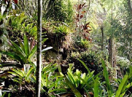 Environmental protection: Rainforest