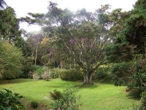 Ecolodge Brazil Itororo rainforest