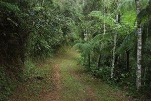 Ecolodge Itororó Brazil rainforest