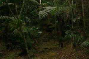 Ecolodge Brazil Itororó rainforest