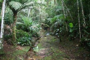 Eco Lodge Itororó Rainforest