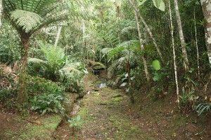 The Eco Lodge Itororó Rainforest