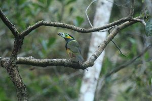 Spot-billed Toucanet Eco-lodge Itororó
